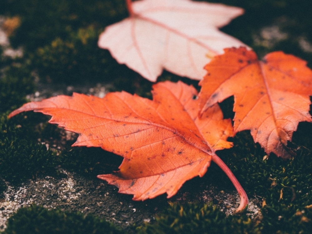 Autumn energy saving tips that will make your bill fall