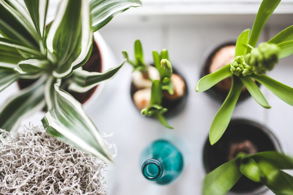 Going green: sustainable energy habits for eco-friendly living